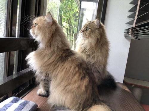 外を眺める猫たち