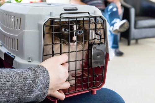 病院の待合室に座る飼い主とキャリーケースに入った猫