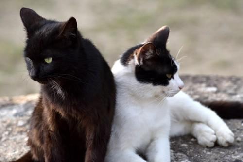 顔を背ける猫たち