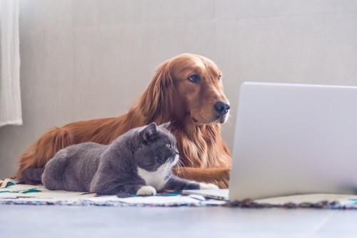 PCを見る猫と犬