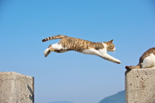 ジャンプして飛び移る猫
