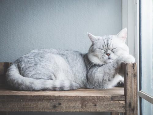 固い場所で寝る猫