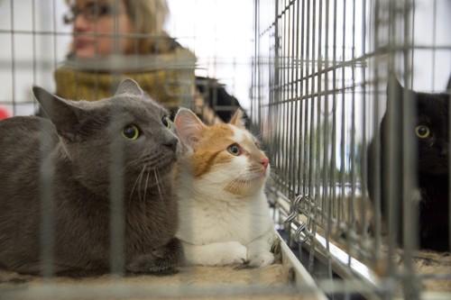 シェルターの猫