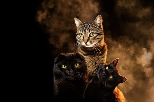 タバコの煙を見る猫たち