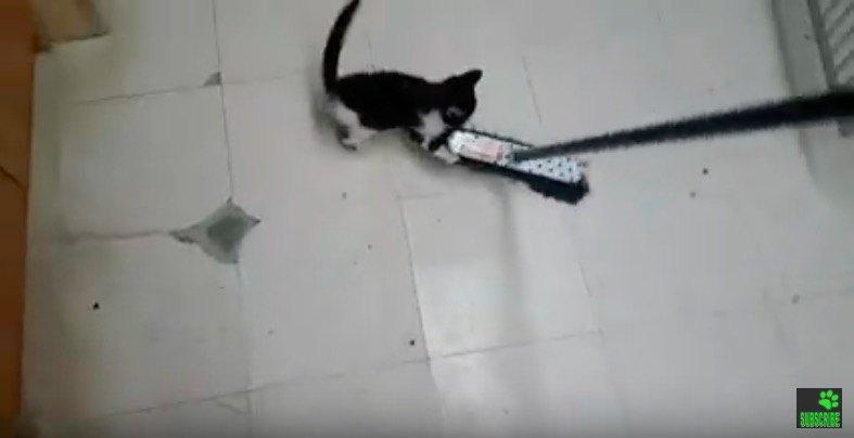 モップで遊ぶ猫
