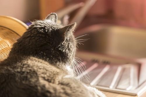 くつろぐ猫の後頭部