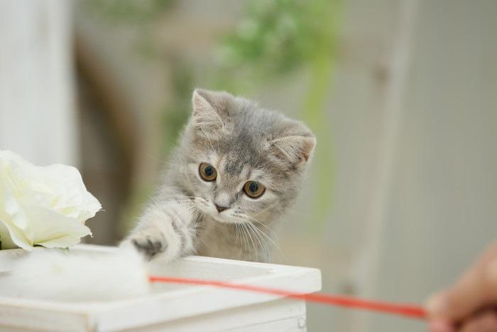 赤い棒に手を伸ばす猫の写真