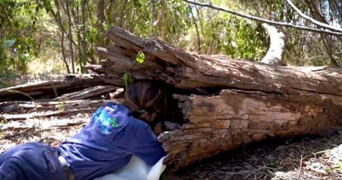 倒木の横に腹這いになる女性
