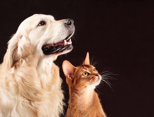 何かを見上げる犬と猫
