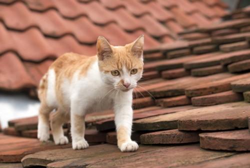 屋根の上を歩く猫