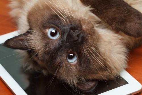 タブレットと猫の写真