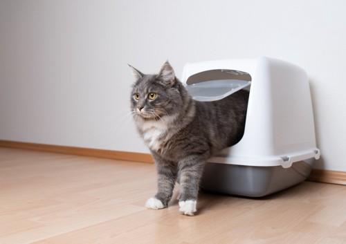 トイレから出てくる猫