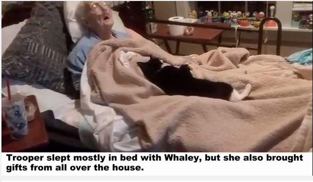 病院のベッドにいるおばあさんと猫