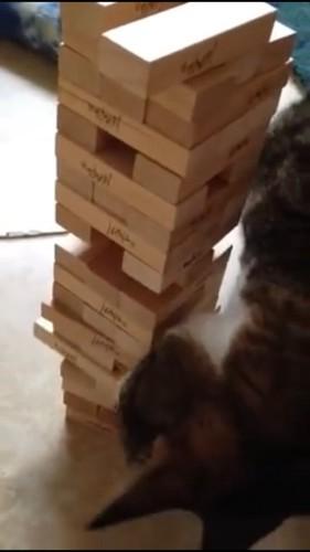 頭を使ってジェンガを選ぶ猫