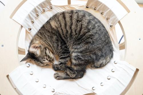 ハンモックの中で丸まって眠る猫