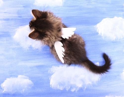 天使の羽が生えた猫