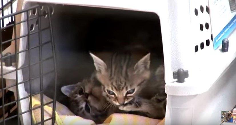 保護された子猫たち