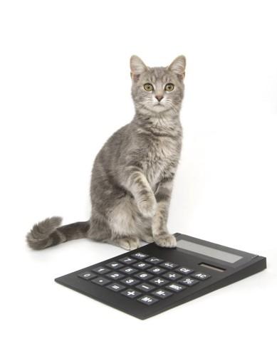猫と計算機
