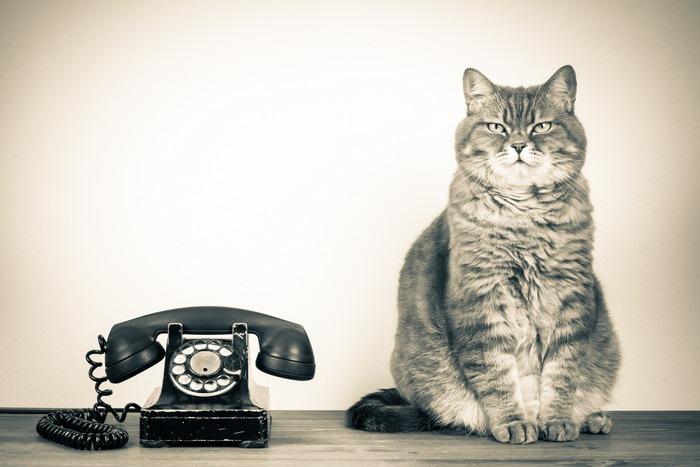 猫と黒電話