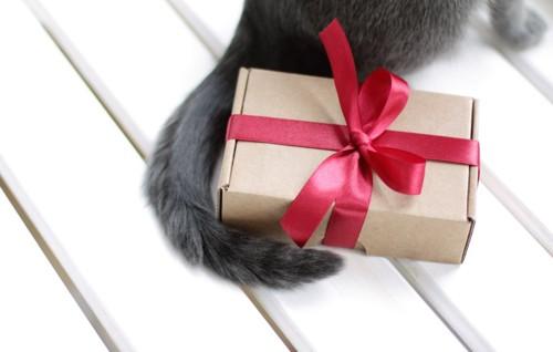 猫のしっぽとプレゼントの箱