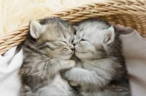 ハグをしながら眠る子猫