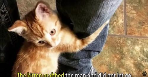 男性の足にしがみつく猫