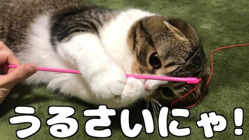 棒を捕まえる猫