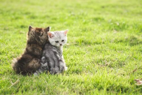 草の上で背中を向ける2匹の子猫