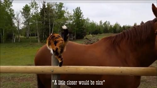 馬の背中に乗ろうとする
