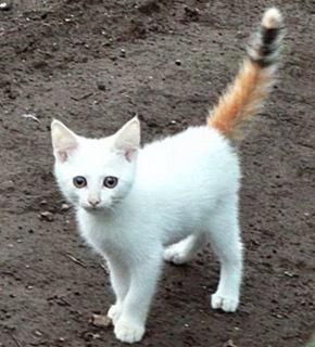 珍しい柄猫20