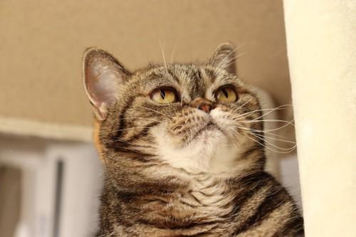 ふっくらした猫