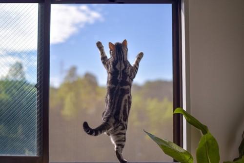 網戸をよじ登る猫