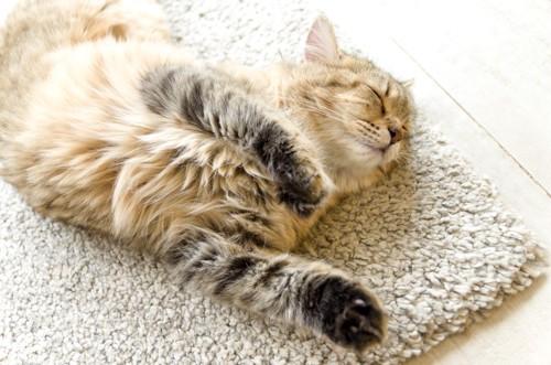 白絨毯に横たわる茶トラ