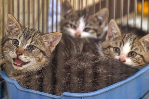 檻の中の子猫