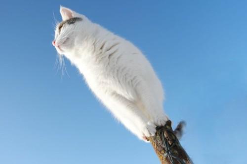 青空の中杭の上に座る猫