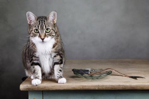 猫と魚の骨