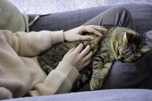 人間と一緒に眠っている猫