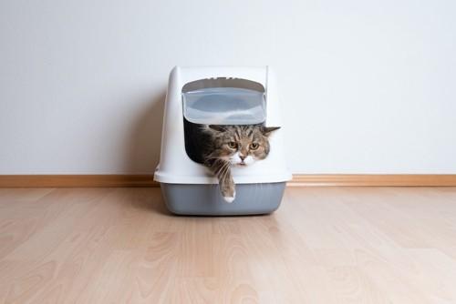 カバー付きトイレから出てこようとする猫