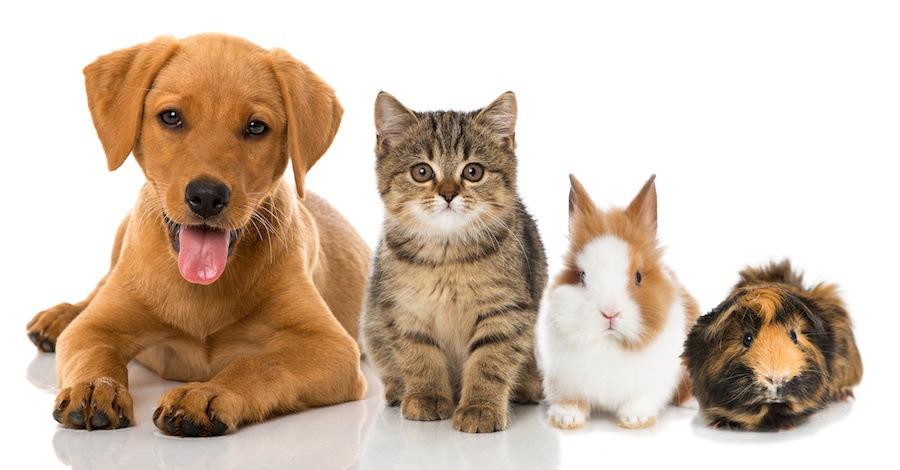様々な愛玩動物たち