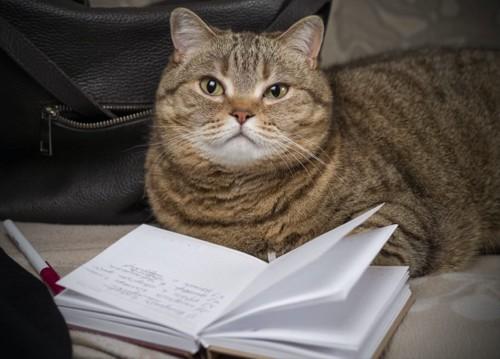 猫の前にある手帳とペン
