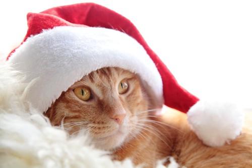 クリスマスの帽子をかぶる猫