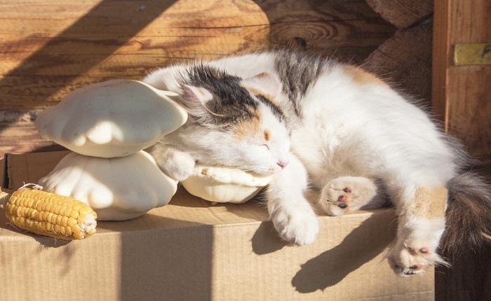 日向で寝ている猫