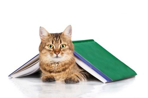 本の下にいる猫