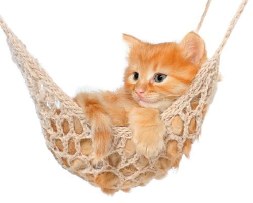網のハンモックに入る子猫