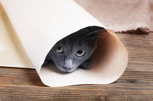 紙に包まる灰色猫