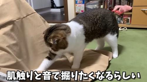 掘るしぐさの猫