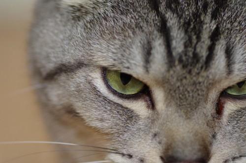 不機嫌そうな猫の目