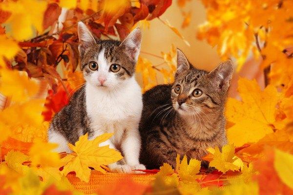 落ち葉と二匹の猫