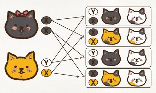 三毛猫になる仕組みの写真