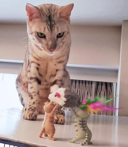 お供え物をされる猫